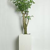 해피트리 사각화이트 대형|happy tree