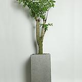 해피트리 그레이화분(대형)|happy tree