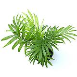 테이블야자 공기정화식물 실내공기정화식물 실내화초|