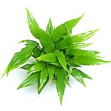 스파트필름 공기정화식물 