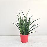 프렌즈스투키/공기정화식물/온누리 꽃농원 