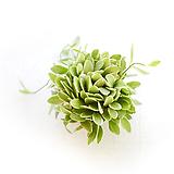 디시디아 볼 화이트 실내공기정화식물 행잉플랜트|
