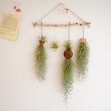 미세먼지 공기정화식물 수염틸란드시아 4종셋트|Tillandsia