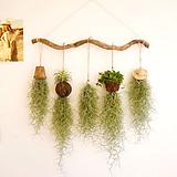 미세먼지 공기정화식물 수염틸란드시아 5종셋트|Tillandsia