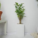 해피트리 중형 사각화분(화이트)|happy tree