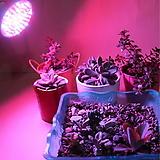 다육월동필수 100W 초강력 식물생장 LED♥다육이 실내재배 필수품♥Full Spectrum♥고출력 프로페셔널용♥식물공장등급 인공태양♥다육이등 다육