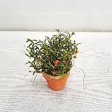메디오칼라(토분)/공기정화식물/온누리 꽃농원 