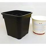 원예용플분 9cm 플분1.8호 3개 플라스틱화분|