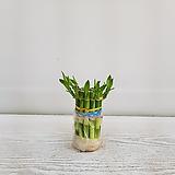 개운죽(10cm,10개입)/공기정화식물/온누리 꽃농원 