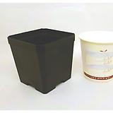 플분도매 플라스틱화분 7.5cm파종분 1box(800개) 
