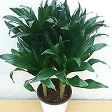콤펙타/공기정화식물