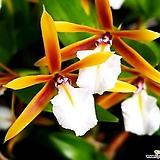 향기로운 꽃의 향연~디네마|