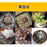화장토 복토 꾸밈돌 미장토 예쁜돌 화분장식 