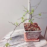은행잎조팝(외목수형의 은행잎들이 가득)완성분 