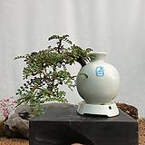 미니산초 주입백자항아리(소품) 도자기분재 분제 분경 분재화분 집들이선물|