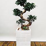 가지마루S팬더 (시멘트사각완성분) 중품 中 인테리어화분 신혼집선물
