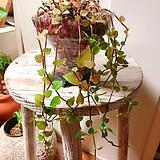 소엽달개비 묵은주(색감이 이쁘며 길게 늘어져 멋스러워요)수제분 완성분세트|Handmade Flower pot