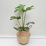 몬스테라+라탄바구니 공기정화식물 인테리어화분 카페화분|