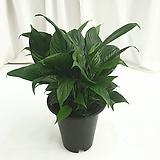 신종스파트필름 공기정화식물 