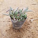 가림원예조경 씨앗 묘목 모종 모음