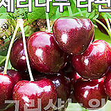 체리묘목 체리나무 라핀 접목1년 [그린샵]