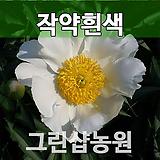 작약묘목 작약꽃(백,분홍)랜덤발송|