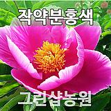 작약묘목 작약꽃(백,분홍)랜덤발송 3개|