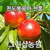 복숭아묘목 복숭아나무 천홍 접목 1년|
