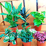 공기정화식물 Set 구성 - 6개 