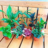공기정화식물 Set 구성 - 8개 