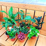 공기정화식물 Set 구성 - 10개 