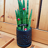 스투키 화분 (Star25) / 블랙(Black)|Sansevieria Stuckyi