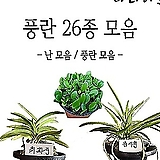 난 모음/동양난/서양난/난/풍란/석곡/식물/소엽란/대엽란/예원/식물기르기/화분/농장/나라아트|