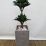 콤팩타2단 (시멘트사각완성분) 대품 축하선물 승진선물 사무실화분|