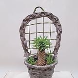 괴마옥 선인장 + 벽걸이화분 그레이 (세트) 인테리어식물 축하선물 카페식물 집들이선물|Euphorbia hypogaea