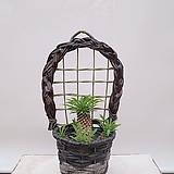 괴마옥 선인장 + 벽걸이화분 블랙 축하선물 카페인테리어식물 집들이선물|Euphorbia hypogaea
