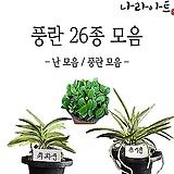난 모음/동양난/서양난/난/풍란/석곡/소엽란/대엽란/예원/식물기르기/화분/농장/식물/나라아트|