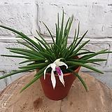 바이칼라 두가지컬러가 한꽃에서 피어납니다:)|