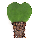 하트호야(단품)|Hoya carnosa
