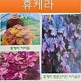 휴케라 모음전(6가지 해외품종) 