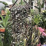 러브체인 체인러브 공중식물|