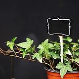 식물이름표 10개 