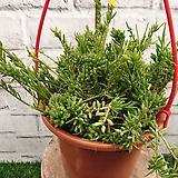 라이스 하얀꽃이피는 공중식물 :)|