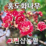 홍도화묘목 홍도화나무 꽃나무 홍도화 개화주|