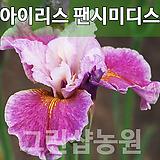 독일붓꽃팬시미디스묘목팬시미디스나무팬시미디스
