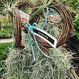 틸란드시아 이오난사 세트 ×2 / 봄철 선물용 식물 / 공기정화식물|Tillandsia