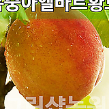 복숭아엘바트묘목 복숭아엘바트나무 유실수 엘바트황도 접목1년 10주|