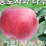 사과홍로묘목 사과홍로나무 유실수 사과홍로 접목1년 10주|Echeveria Hongro