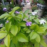 자스민꽃 향이 사계절피는아이|
