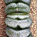 아쯔모리 돈성 